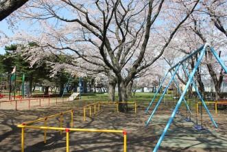 三沢市街パシャ写真『公園と桜】