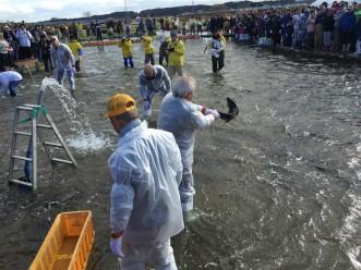 三沢市街パシャ写真『鮭つかみどり、青森イチのイベント!】