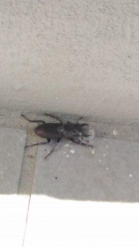 三沢市街パシャ写真『虫も活動中!】
