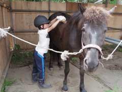 三沢ホースパーク MISAWA HORSE PARK写真