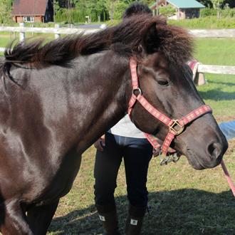 horse02