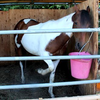 horse04
