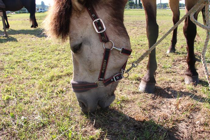 horse05