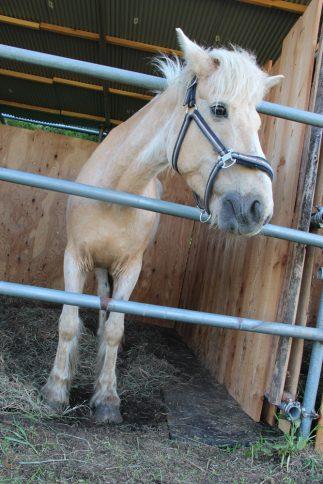 horse06
