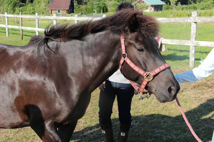 horse08