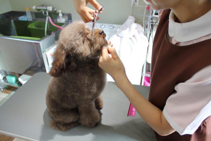 ドッグサロン グルーミング ワン Dog Salon grooming Wan写真
