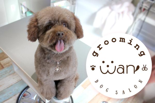 【ドッグサロン グルーミング ワン Dog Salon grooming Wan】写真