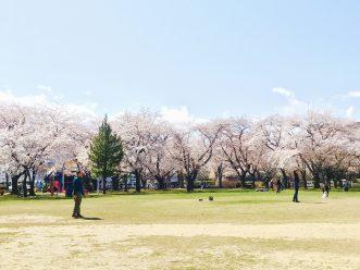 三沢市街パシャ写真『中央公園満開ー!】