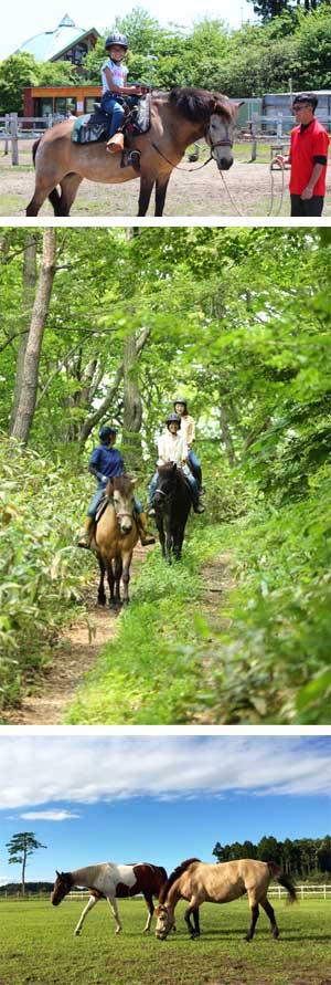 【三沢ホースパーク MISAWA HORSE PARK】写真