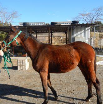 【新馬名前募集】三沢ホースパークに新しい仲間がやってきました!