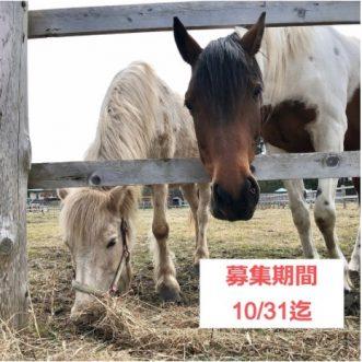 misawa_interpreters02